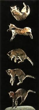 gatto 7 vite