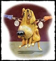 separazione cani