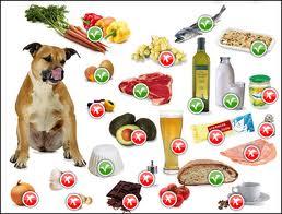 dieta cane anziano