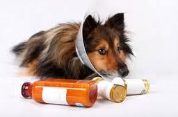 farmaci generici per cani e gatti