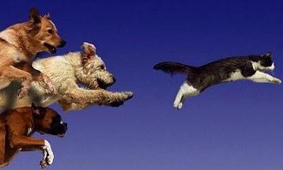 velocità gatto