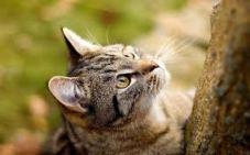 gatto predatore