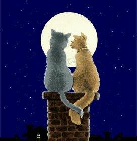 gatti nella luna