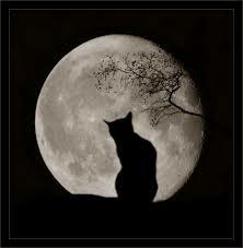 sesto senso gatto