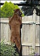 cane fuggitivo