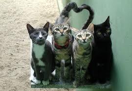 gatti randagi seviziati