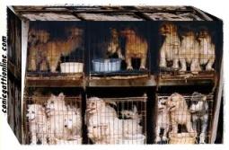 cani in vendita negozi