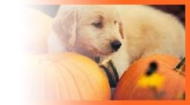 halloween cani