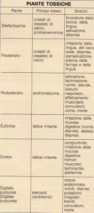 elenco piante tossiche