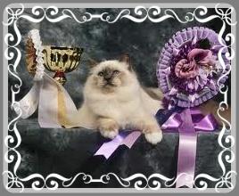 esposizioni gatti