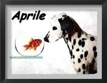 eventi cinofili aprile
