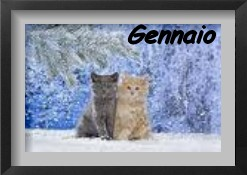 esposizioni feline gennaio