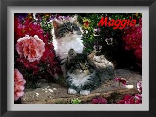 esposizioni feline maggio