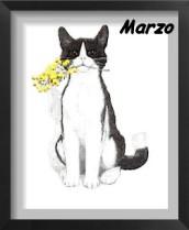 esposizioni feline marzo