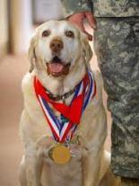 Dog Hero Awards 2012