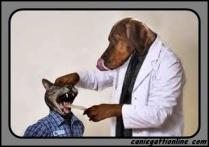 gatto in visita dal veterinario