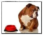 cane rifiuta cibo