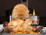 La dieta salutare del gatto