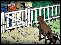 istinto territorio cane