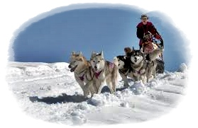 dog on the snow 2013