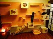 parete attrezzata gatti