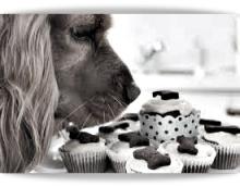 dieta salutare cani e gatti