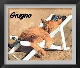 Esposizioni feline Giugno