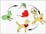 malattia Filaria cane