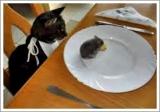 dieta sana gatto