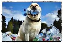 cane Guinness dei Primati