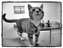 fisiologia gatto