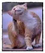 pulci e zecche gatto