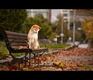 eventi cani