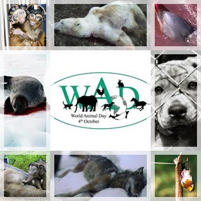 violenza sugli animali