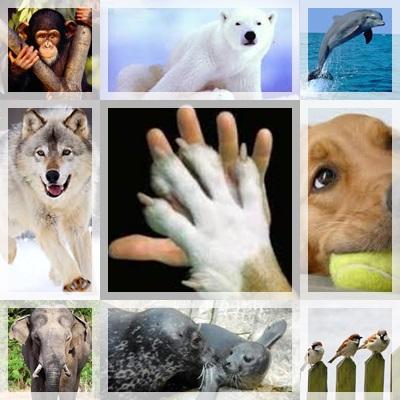tutela degli animali