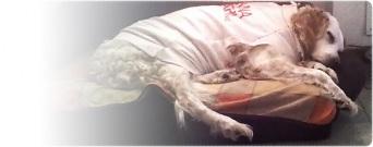insonnia e narcolessia cani