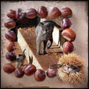 esposizioni feline
