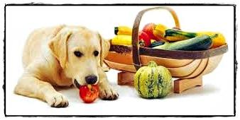 alimentazione cane diabete