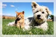 alimentazione di primavera cani e gatti