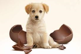 Pasqua cani