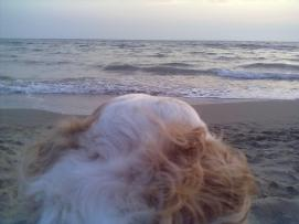 cane verso orizzonte