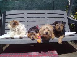 cani sul dondolo