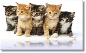 gatto in famiglia