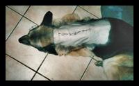 ernia del disco cane