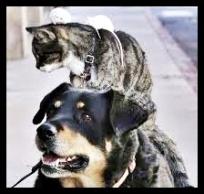 gatti nei cassonetti