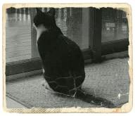 poesia gatto