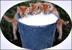 carenza vitamina A cani e gatti