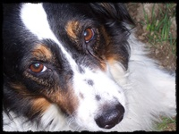 fedeltà del cane