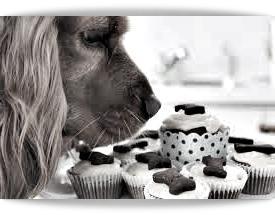 ricetta per cani e gatti