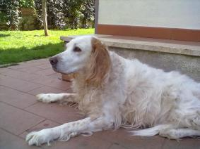 solitudine cane